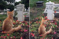kucing sedih